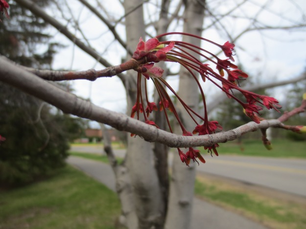 Signs of spring.